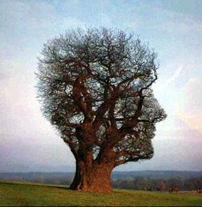 Géobiologie et coévolution l'esprit des plantes